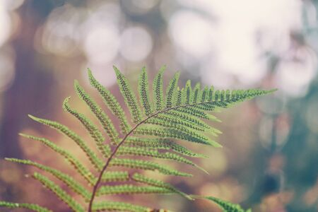Fern leaves on a background of bright autumn forest in the afternoon