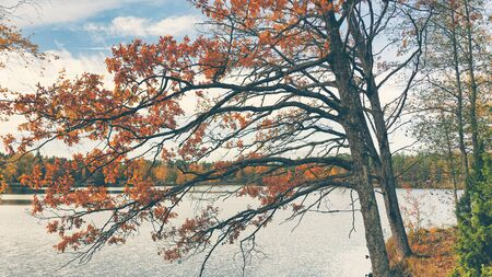 Autumn forest with colored leaves on the lake in October