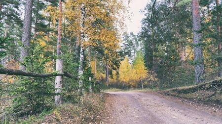 Dirt road in a mixed autumn forest in daylight natural light on a cloudy day Reklamní fotografie