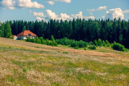 House on a hill at the edge of the forest near a large field with dandelions in summer. Latvia 스톡 콘텐츠 - 146598457