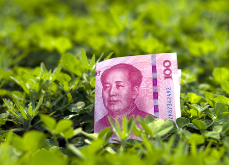 luxuriant: Chinese yuan on thick clover