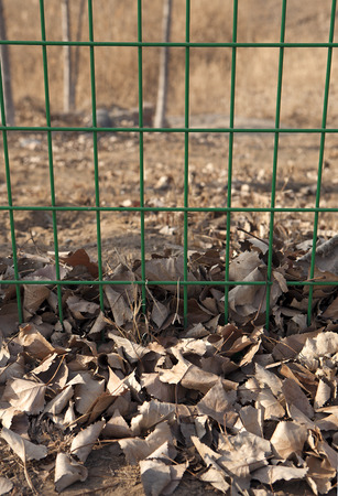 loess: Leaves under the fence Stock Photo