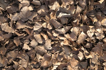 hojas secas: Scattered dry leaves background