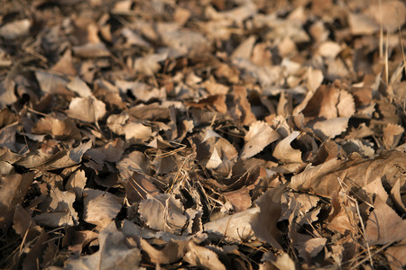 hojas secas: dry leaves background Foto de archivo