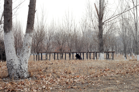 Landscape view of a park during winter