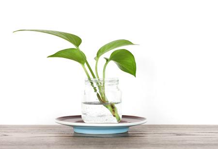 Indoor plants in a vase