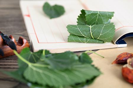 Medicinal mulberry leaf 写真素材