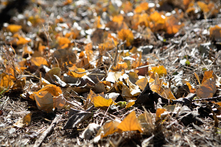Yellow leaves on the ground Imagens