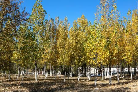 Autumn forest Imagens