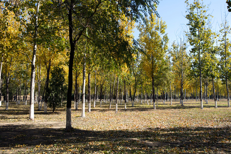 Autumn trees in the park under the blue sky Imagens