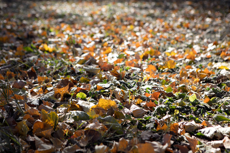 Yellow leaves in autumn Imagens