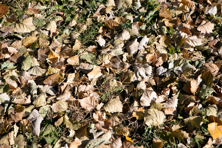 Fallen leaves Imagens - 113369480