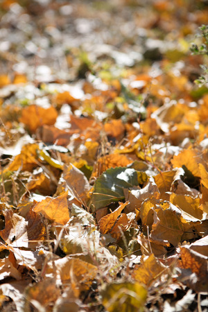Leaves stacked on the ground in autumn