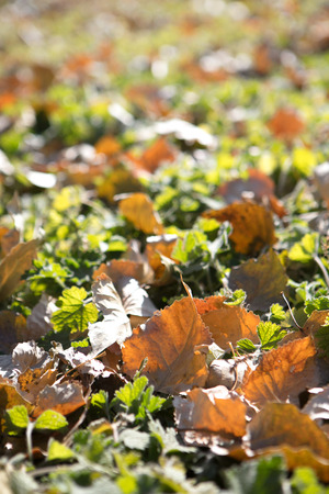 Leaves stacked on ground Imagens
