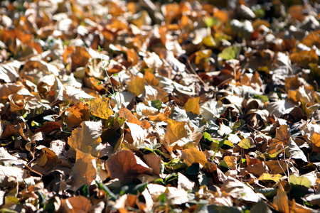 Autumn  golden leaves on the ground Imagens