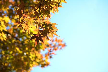 Autumn  leaves Imagens