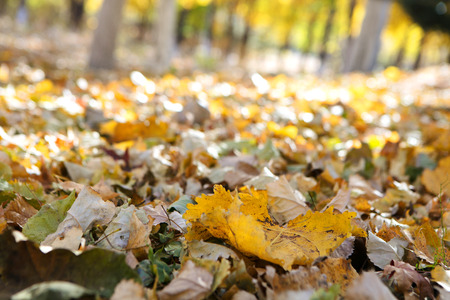 Autumn  leaves on the ground Imagens