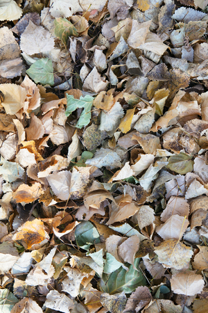 Withered leaves background Imagens - 113371132