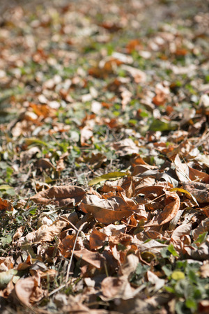 Withered leaves on the ground in late autumn