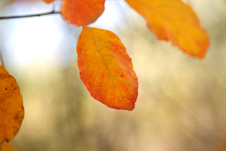 Beautiful autumn leaves in the north Imagens