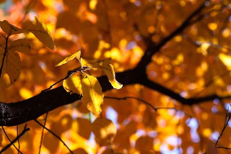 Autumn red leaf background