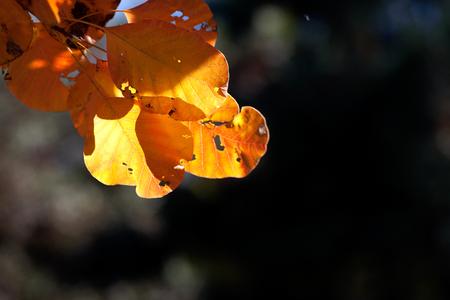Autumn beautiful red leaf