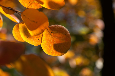 Northern autumn leaves