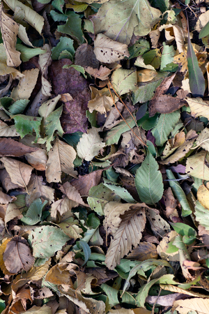 Dead leaves background in late autumn ground