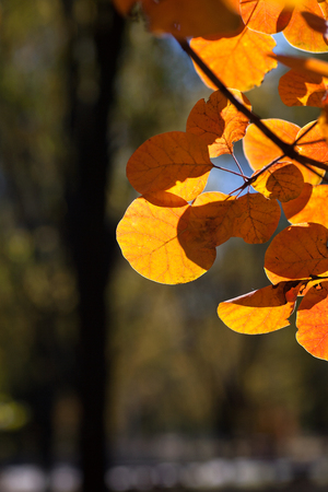 Autumn leaves of autumn branches Imagens