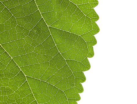 Green leaf part texture