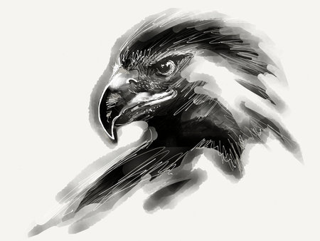 Eagle head drawing Stockfoto