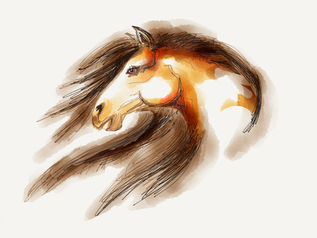 brown horse: Mustang Horse head drawing