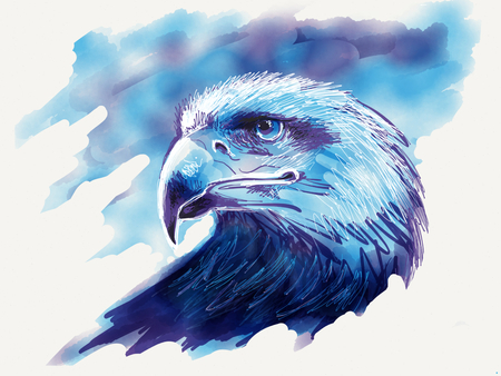 black hawk: Eagle head drawing Stock Photo