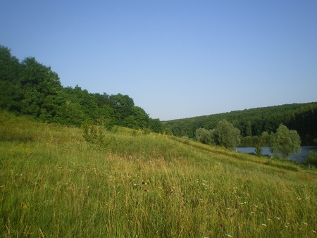 green grass in the meadow and forest in the distance. blue pond. warm sunny summer day. landscape. Ukraine
