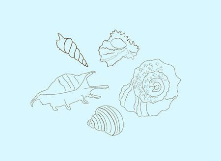 Unusual hand-drawn contour of seashells on a soft blue background. Marine theme