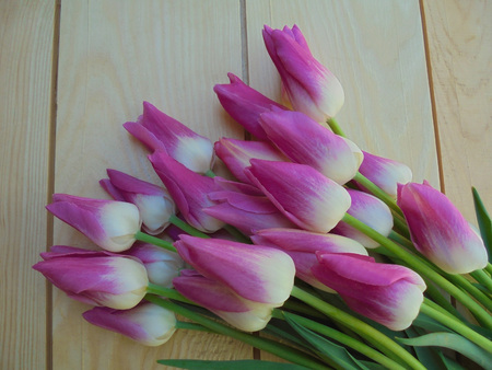 beautiful pink and white tulips beautifully lying on light wooden boards. background for cards