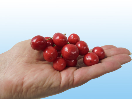 delicious red cherries on the palm on a white-blue background