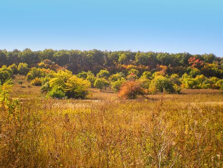 autumn landscape trees bushes with yellow and red foliage and dry orange grass in the foreground and forest against the blue sky. landscape of Ukraine
