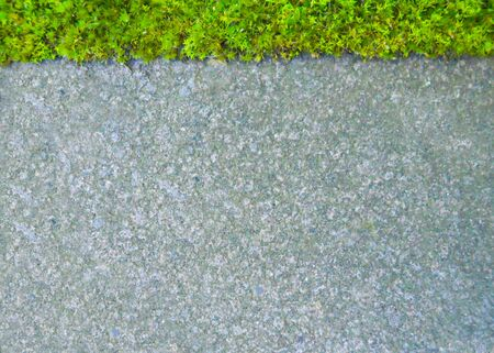 a thin strip of green fresh moss on top of a pattern on a background of gray paving tiles, background. copy spice Banque d'images - 133063707