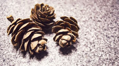 three brown larch cones on a gray stone background. selective focus in the center