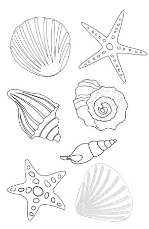 Coloring book black contours of seashells and stars on a white