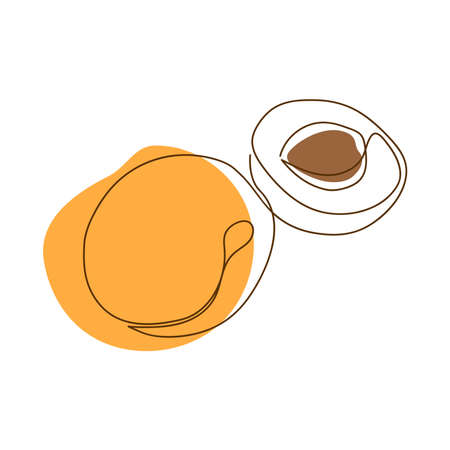 drawn by a solid dark line an apricot and a half of an apricot on a background of abstract orange and brown spots on a white background