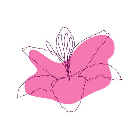 hand-drawn outline of lily flower in one solid line on abstract pink spot background on white background Ilustracja