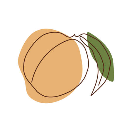 a peach with a leaf drawn in a solid line against a background of light orange and green spots on a white background
