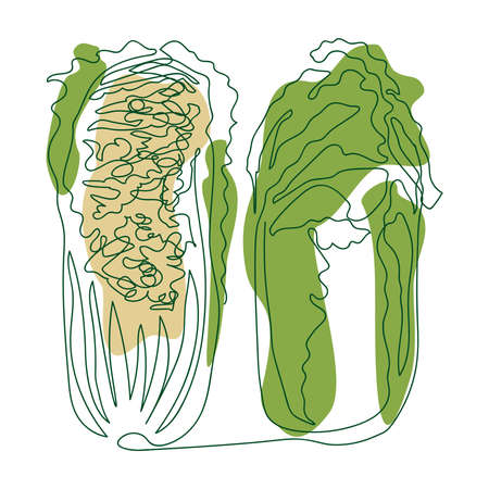 Chinese cabbage whole and cut in half drawn in one solid line by hand on a background of green and beige abstract spots on a white background Ilustracja