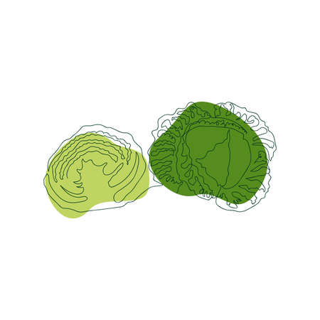 savoy cabbage whole and cut in half, hand drawn in one solid line against a background of green abstract spots on a white background