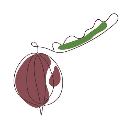gooseberry berry is drawn by one continuous line on a background of abstract spots of burgundy and green on a white background