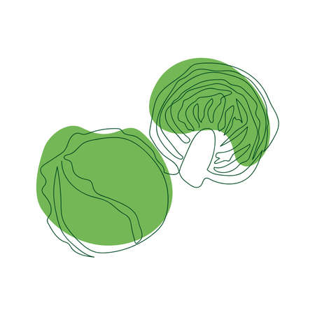 white cabbage whole and cut in half drawn in one solid line by hand on a background of green abstract spots on a white background