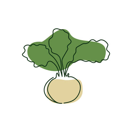 drawn by a solid one line half white kohlrabi with green leaves on a background of abstract spots of green and beige on a white background Ilustracja