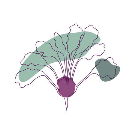 drawn by solid line half of purple kohlrabi with green leaves on a background of abstract spots of green and purple flowers on a white background